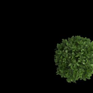 header_flowerpot